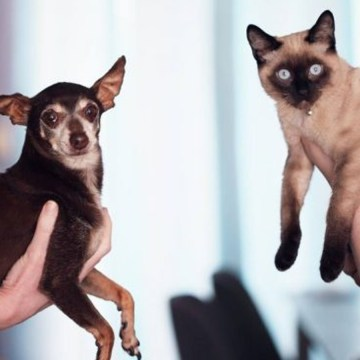 Tips para introducir con éxito una segunda mascota en el hogar