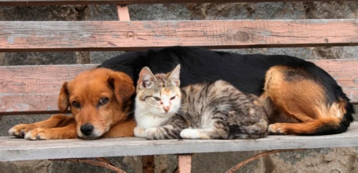 Conozca qué veterinarias esterilizarán gratis a perros y gatos rescatados en calles de Surco