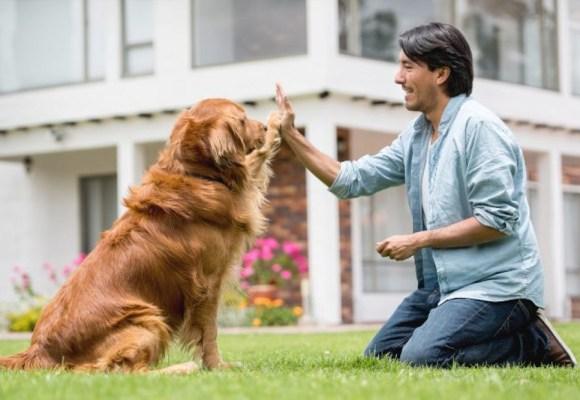 Las cuatro razas de perros más fáciles de adiestrar