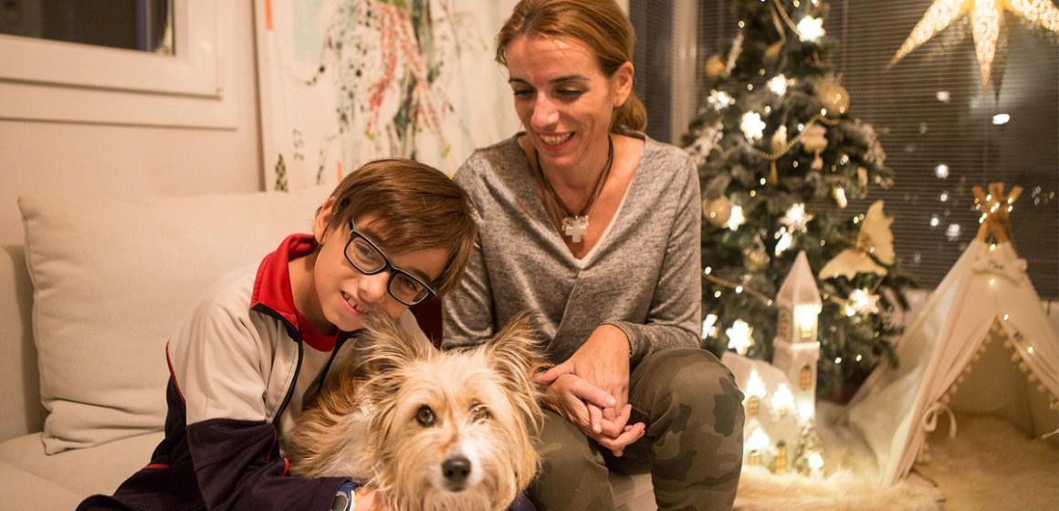 5 consejos para proteger a nuestras mascotas de la pirotecnia en estas fiestas