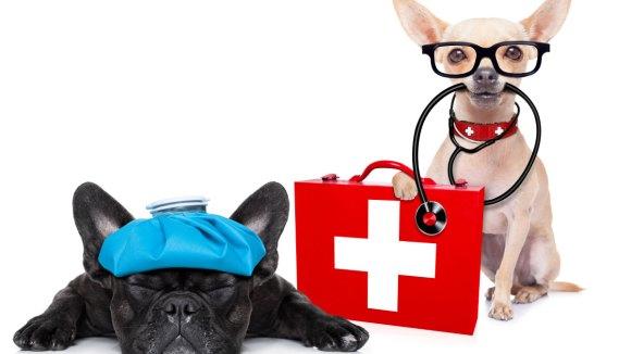 Primeros auxilios para nuestras mascotas