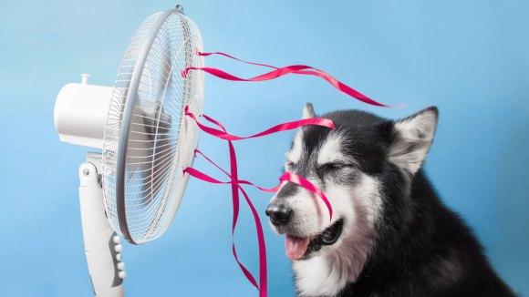 10 consejos para refrescar a tu perro en verano