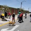 Arequipa en alerta epidemiológica ante incremento de casos de rabia canina