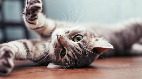 Vida con gatos: tres características que los distinguen