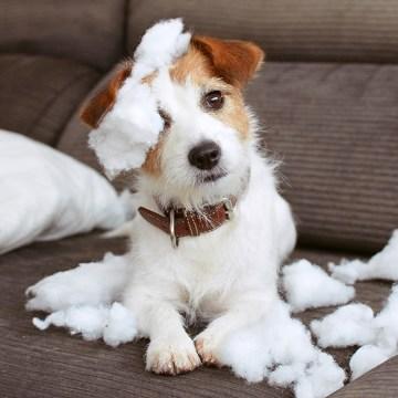 ¿Cómo saber si mi perro tiene ansiedad?