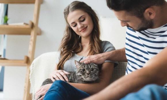 5 Beneficios de convivir con un gato