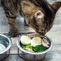 El huevo en la alimentación de nuestras mascotas