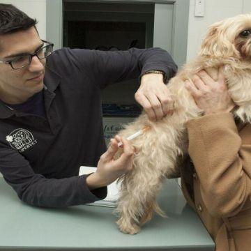 Municipalidad de Chancay anuncia tercera campaña de esterilización de mascotas 2021