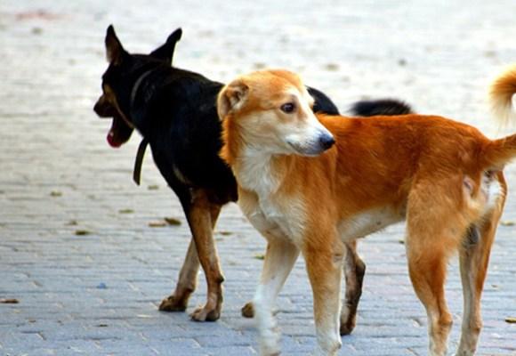 28 de mayo: Día del perro sin raza