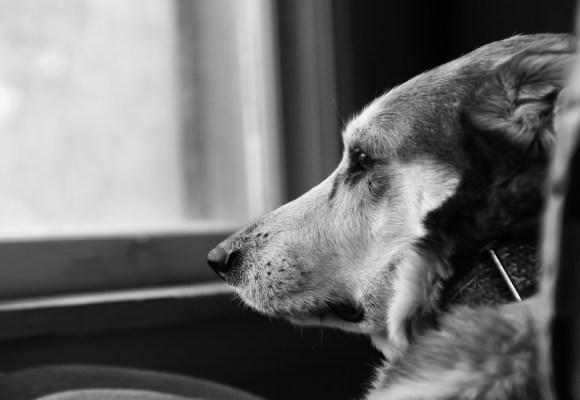 ¿Cómo afecta la pandemia a las mascotas?