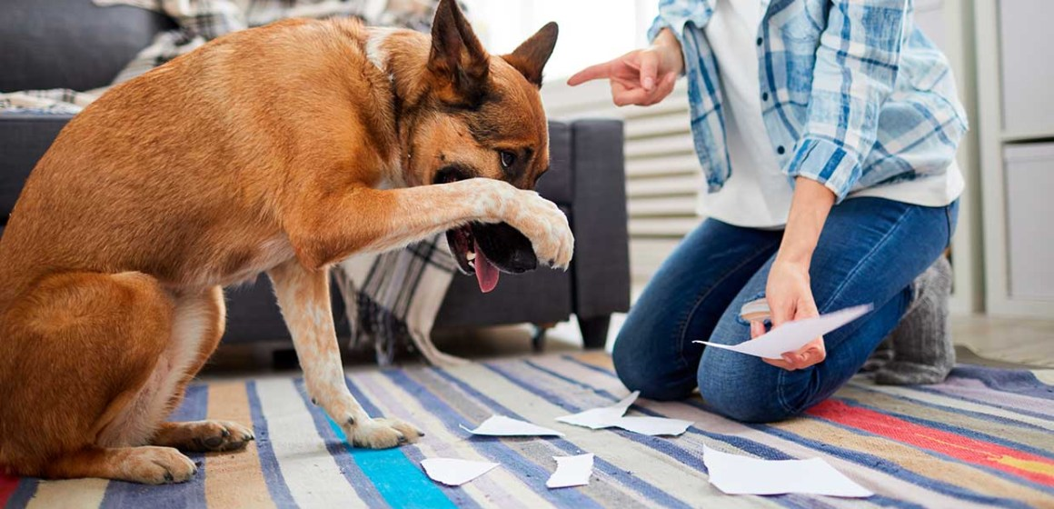 Cinco cosas que tu perro hace y que, según los veterinarios, no debería