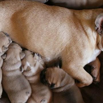 Cinco cuidados que necesita un cachorro recién nacido