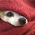 Cuidados especiales para las mascotas en días fríos
