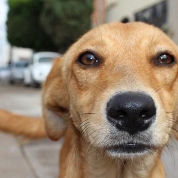Día Internacional del Perro Callejero: muchas historias los recuerdan, pero pocos encuentran hogar