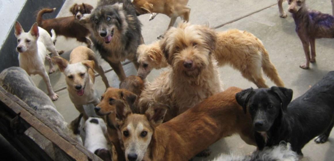 Día Internacional del Animal Sin Hogar: ¿cuál es la importancia de esta celebración?