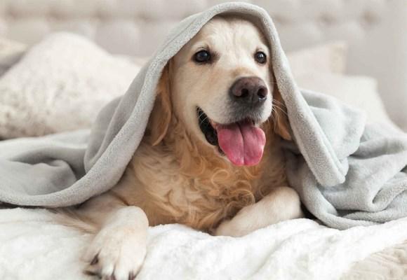 ¿Cómo proteger a tu mascota del frío y la humedad?