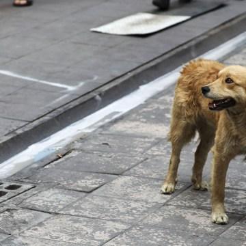 Consejos para evitar que nuestros perritos se pierdan