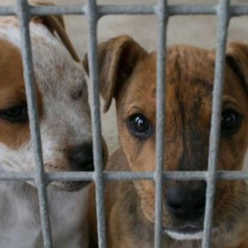 23 de setiembre: ¿por qué se celebra el Día internacional del perro adoptado?