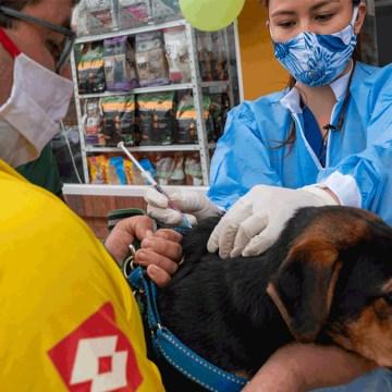 La OPS insta a los países a redoblar su compromiso para eliminar la rabia humana transmitida por perros