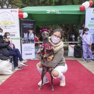 Vacunapet: campaña de vacunación contra la rabia en Surco
