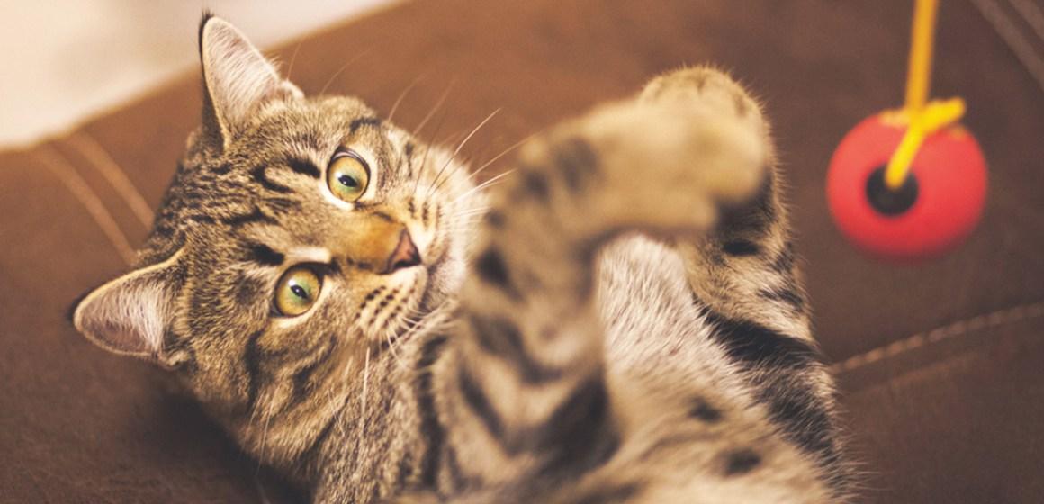 ¡Por qué su gato necesita jugar y cómo hacerlo bien!