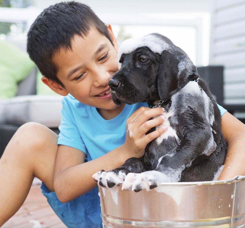 Responsabilidad de tener un perro