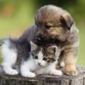 Día Internacional de los Animales