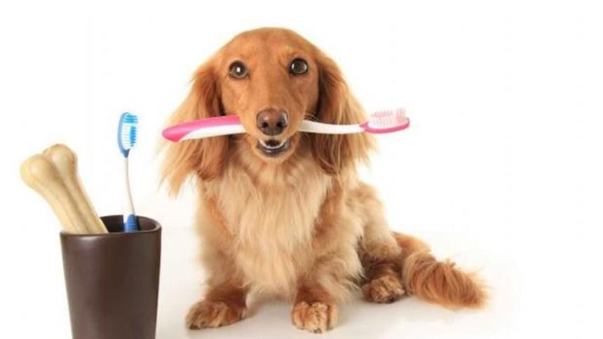 Cinco consejos para cuidar la salud bucal en perros