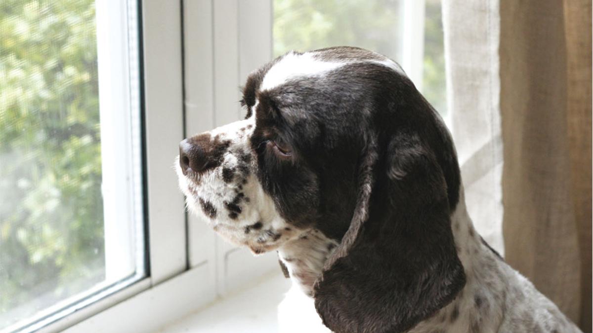perros después de pandemia